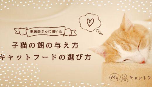 【獣医師さんに聞きました】子猫の餌の与え方・キャットフードの選び方