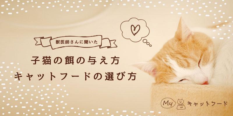 子猫の餌の与え方・キャットフードの選び方