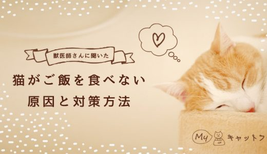【獣医師さんに聞きました】猫がご飯を食べない原因と対策方法