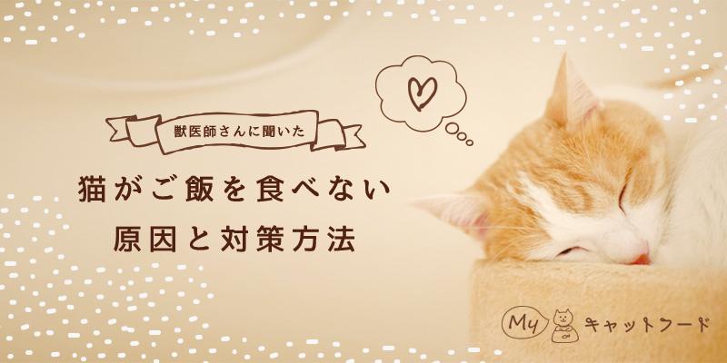 猫がご飯を食べない原因と対策方法