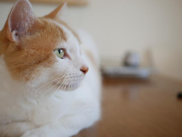 猫がご飯を食べないときの対策方法