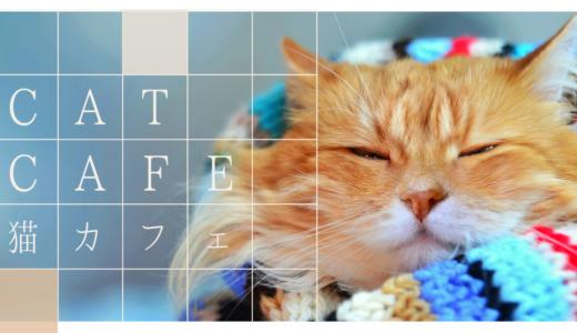 【猫好き必見】初めてでも楽しめる猫カフェの基本ルールやおすすめの猫カフェまとめ